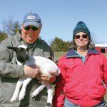 Breeding Hearty Sheep