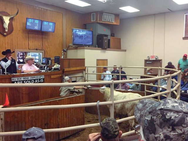 Lessons Learned in the Cattle Business
