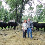 Tractors, Horses and Cows