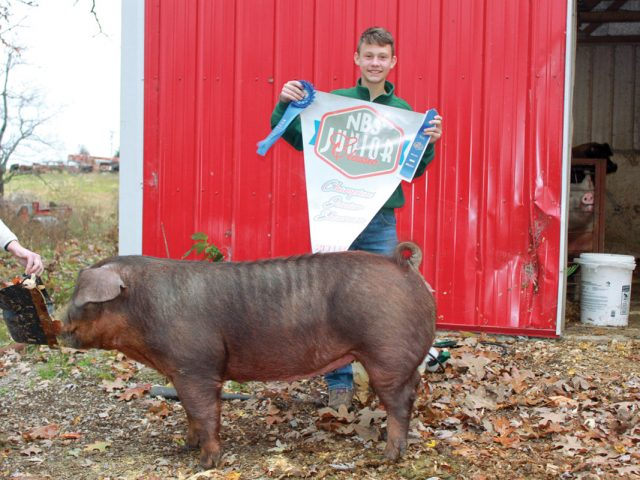Sold on the Swine Industry