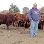 For the Love of Red Cattle