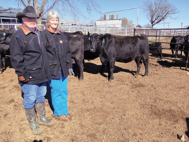 Breeding Uniform Cattle with Angus
