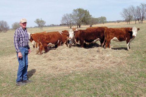 Herefords are Part of the Baker Heritage