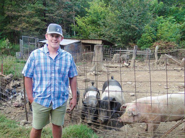 Show-Quality Swine