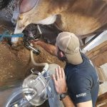 Catering to Raw Milk Lovers